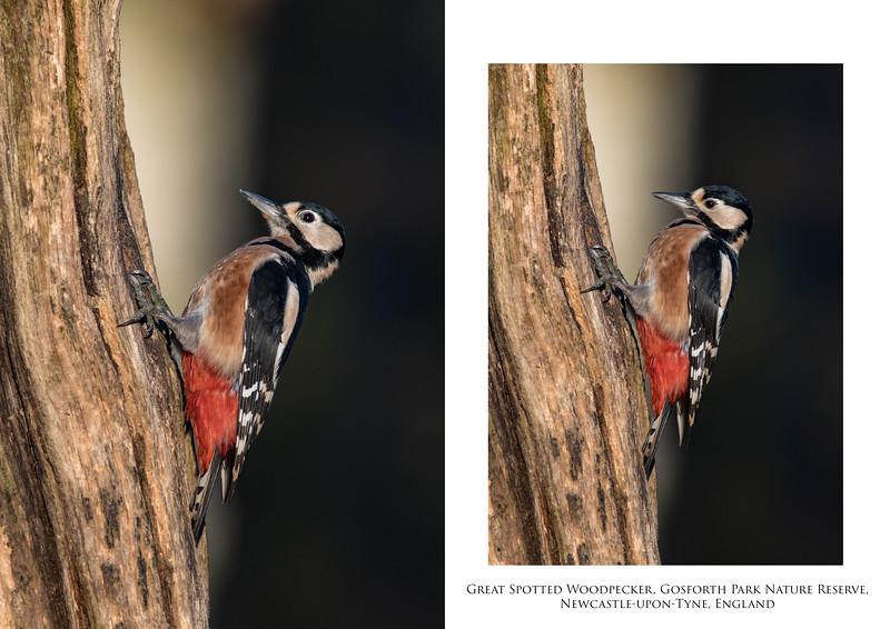 Woodpecker 2.jpg
