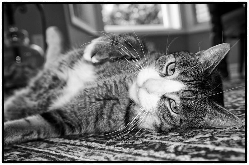 2012-01-21_McLovin_Sleeping~2.jpg