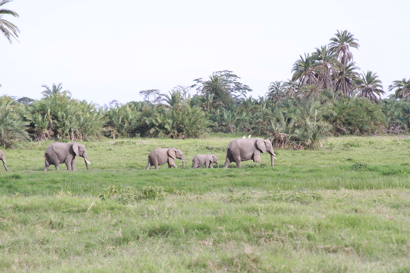 Kenya 2019 #2 558.JPG