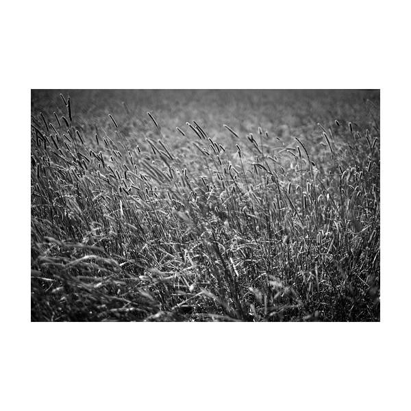 219_Field002_10x10.jpg