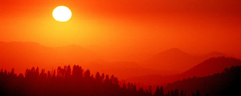 sequoia_A--900.jpg