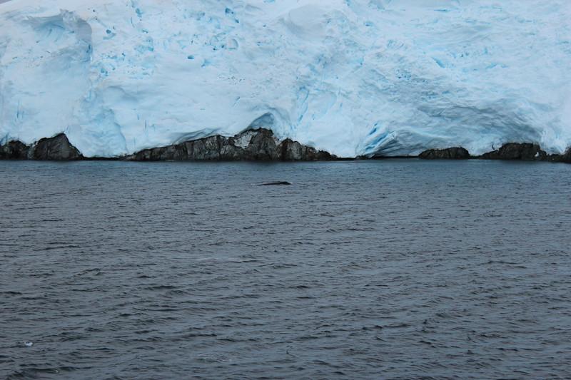 Antarctica 146.JPG