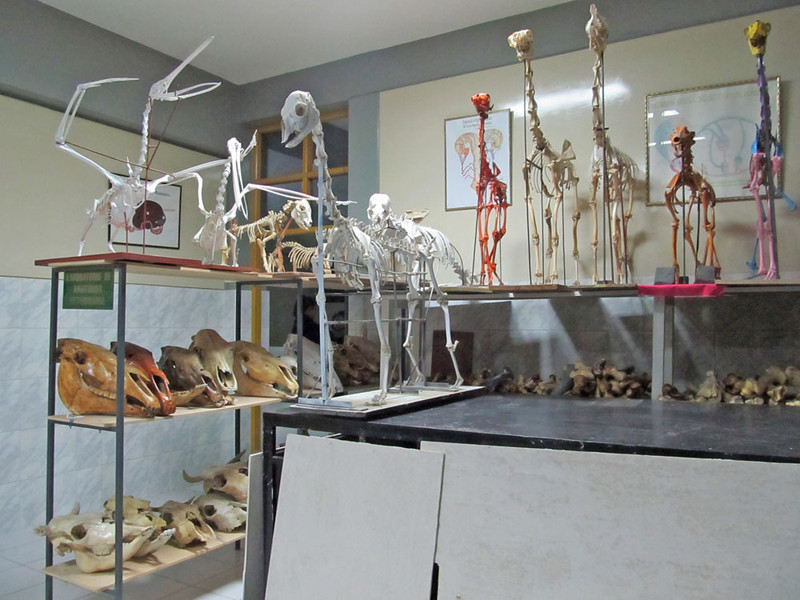 They were kind enough to show us their anatomy museum and teaching laboratories, which included some very interesting camelid skeletons (llamas, alpacas, etc).