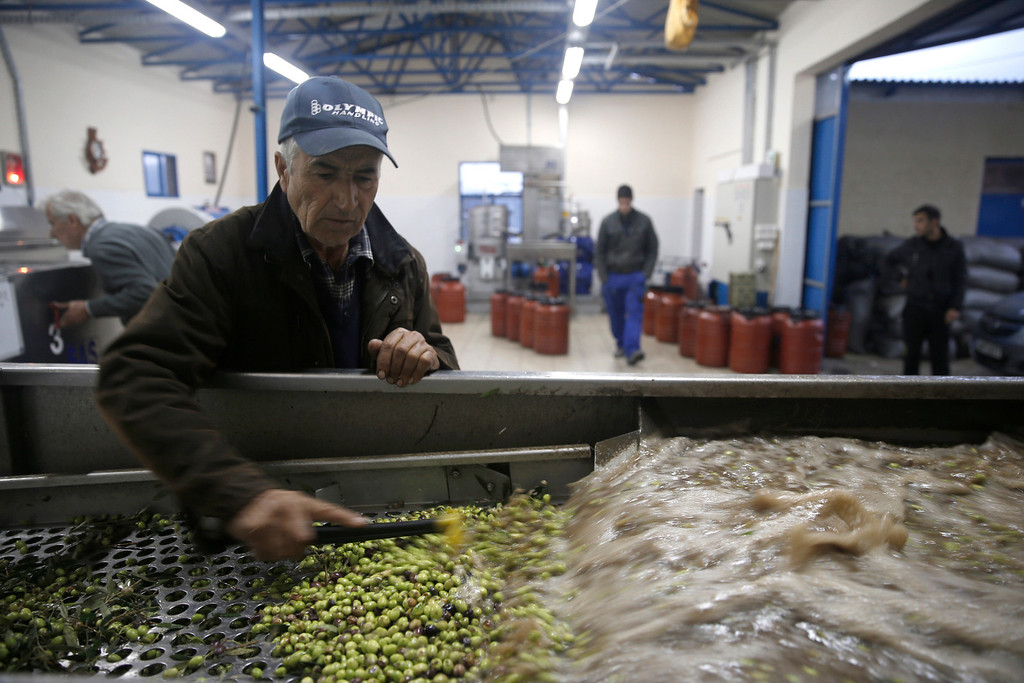 . In this Saturday, Nov. 30, 2013 photo, Konstantinos Vasilopoulos operates a machine that washes olives at his family-owned olive oil business in Velanidi village, 320 kilometers (200 miles) west of Athens. Plans to extend a brutal efficiency drive to olive oil production in Greece have been met with anger and disbelief. If proposals from a government funded study are adopted, olive oil blended with cheaper vegetable oils will soon go on sale as part of an effort to modernize Greece\'s economy, which was rescued from near bankruptcy four years ago. (AP Photo/Petros Giannakouris)