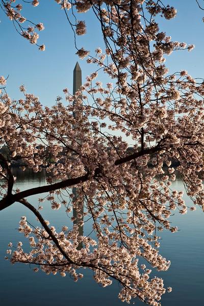 2009-04-05-Washington-DC-0778.jpg