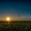Wheat, Sun and Wind turbines