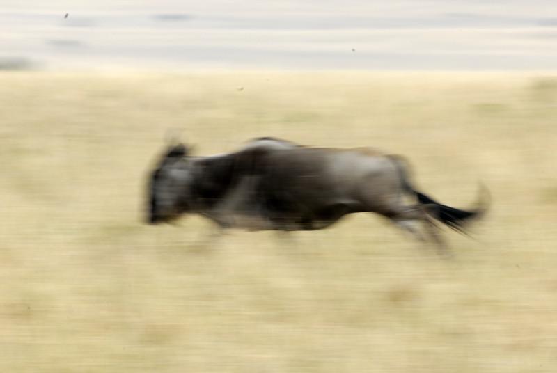 Kenya Aug 2007 035.JPG