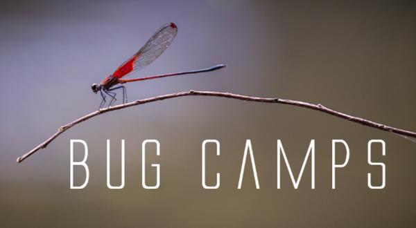 BugCamps™