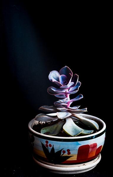 succulent-8565.jpg