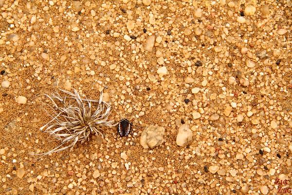 Flora sand dunes, Namibia