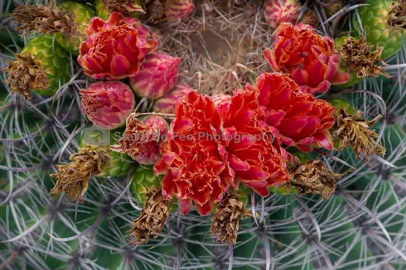 Tucson-213 Flowers.jpg
