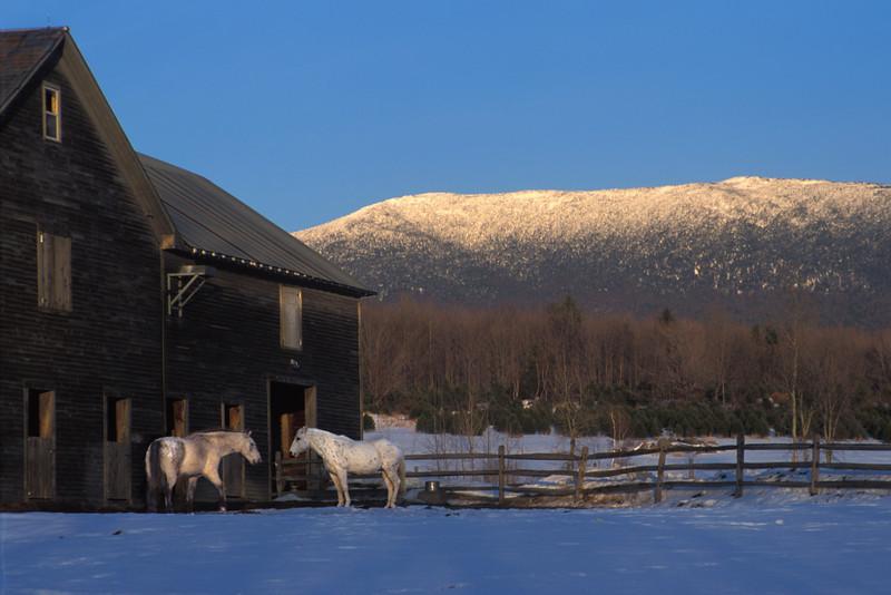 Horses_And_Barn.jpg