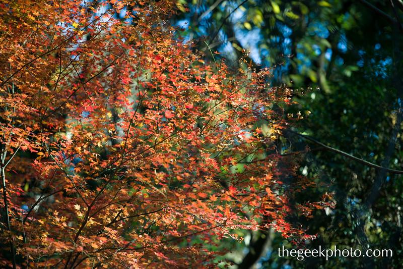 thegeekphoto_151222_0063.jpg