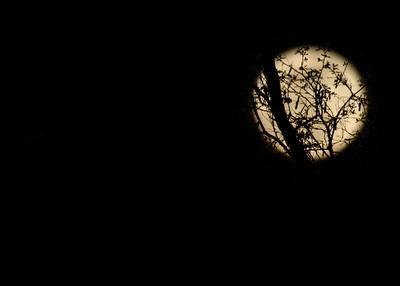 2013 April 25 Full Moon over Elsinboro NJ