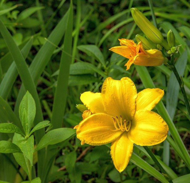 Garden 1, 185.jpg