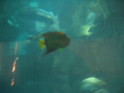 Shedd Aquarium - Seans first trip to the Shedd