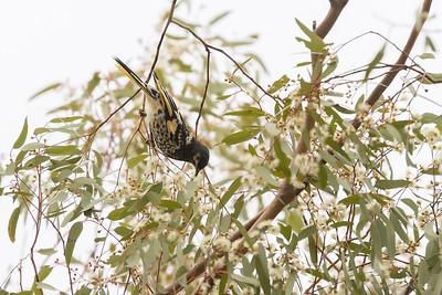 Australia's Threatened Species