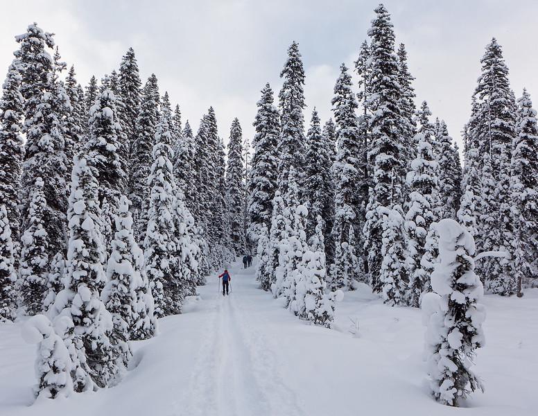 Elk Pass trail, just below the top, November 14.