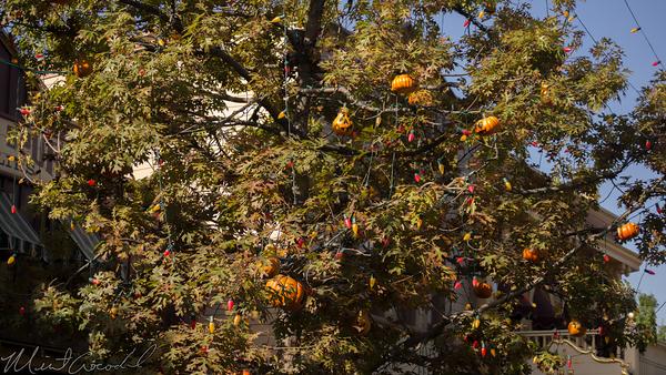 Disneyland Resort, Disneyland, Frontierland, Halloween Tree, Halloween, Tree, Pumpkin