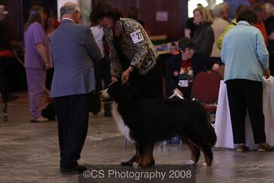 Versatility Dog Under 7yrs-BMDCA 2009