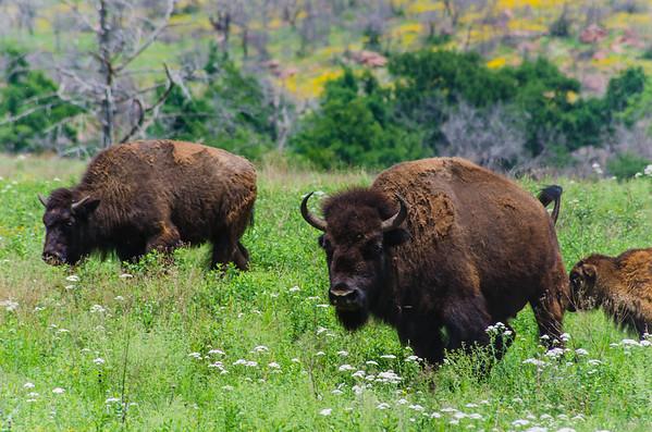 Wichita Mountains Wildlife Refuge - 2013
