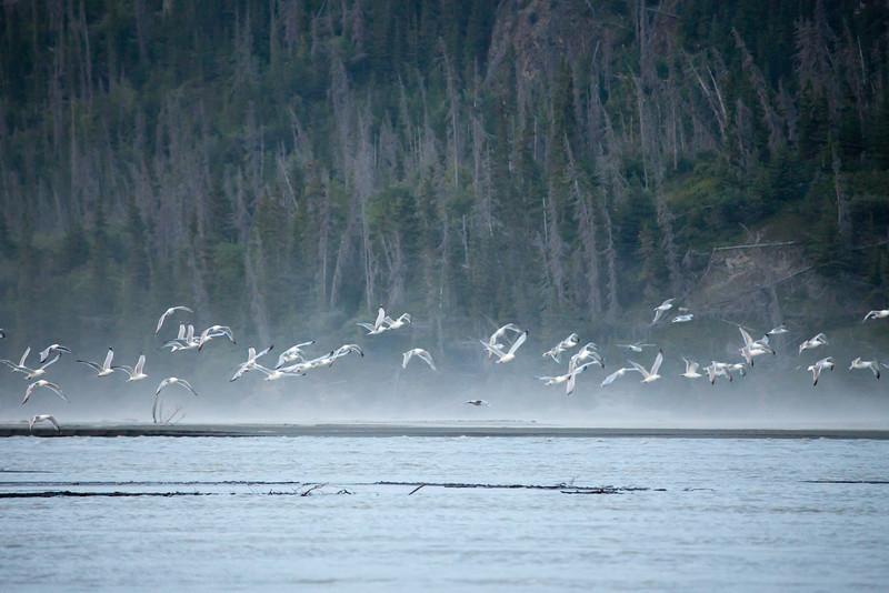 Alaska Copper River-8340.jpg