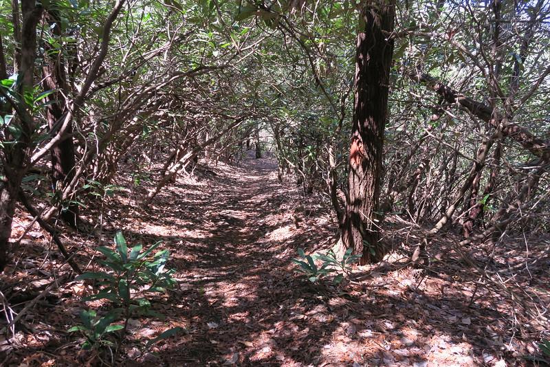 Ridge Trail - 2,920'