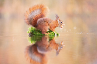 How to photograph a squirrel