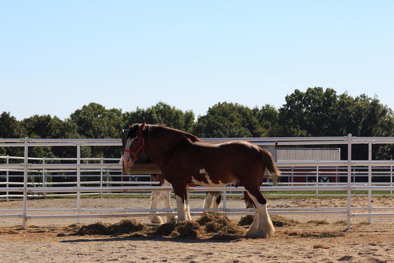 2015_09_26 Warm Springs Ranch 005.jpg