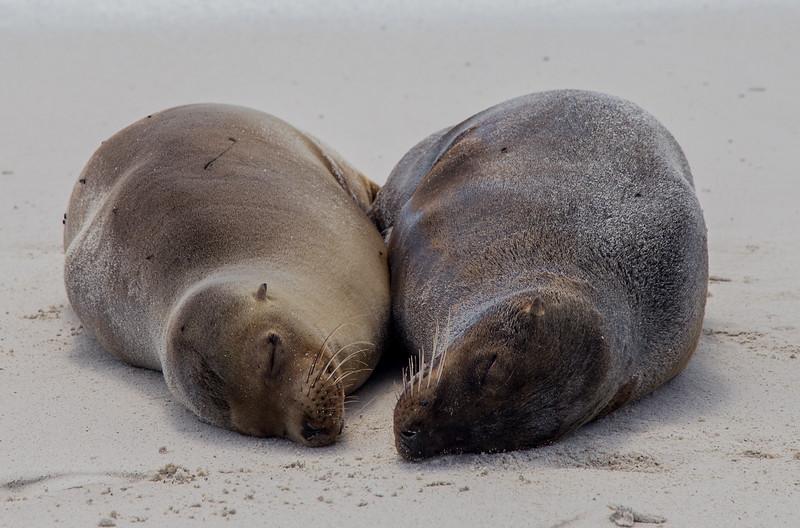 Galapagos_MG_4396.jpg