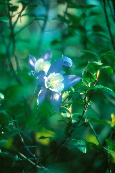 amh FLOWERS (1124).jpg