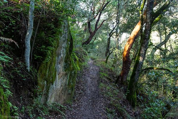 Madrone Canyon Loop Hike, January 23, 2018