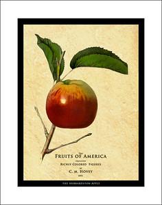 Fruit prints 1853