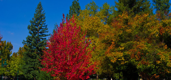 Fall Colors at Sac State