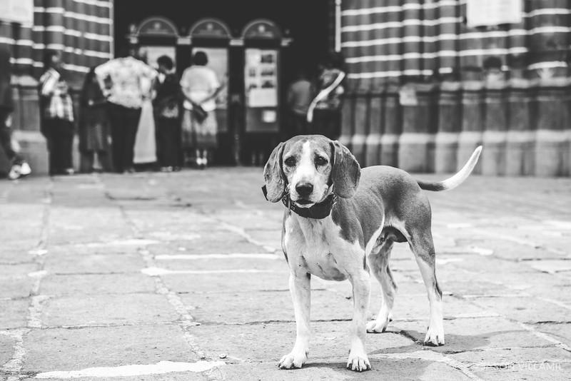 El Perro Jardin.jpg