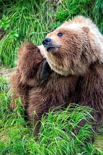 Alaska_2013_FH0T5276.jpg