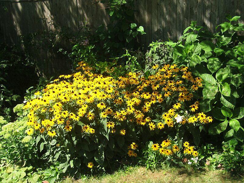 garden-2005-08-0304_std.jpg