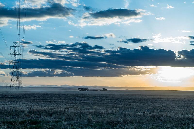 barley 17.jpg