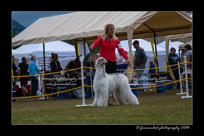 06/26/2016 - AKC - All Breed Show