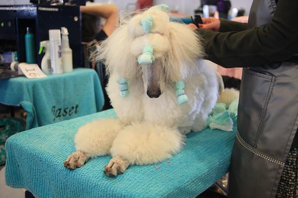 Dog Show Rawhide Nov 2017