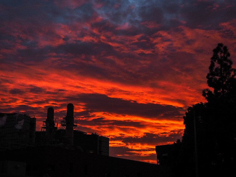 January 29 - Westwood sunset.jpg