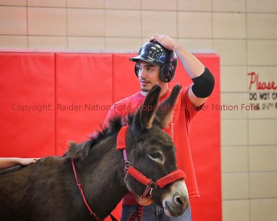17 Donkey Basketball
