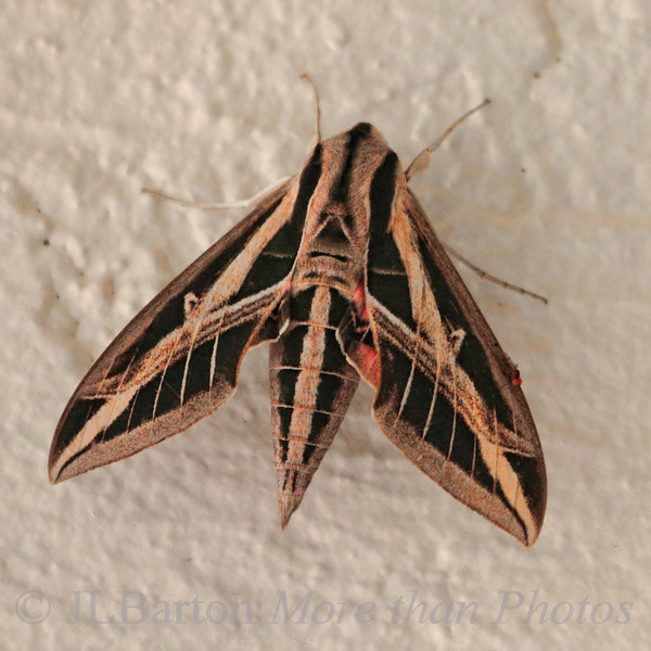 One last Florida shot