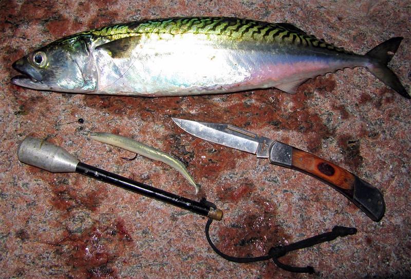 Makrel 43 cm, 630 g renset vægt. Djursland juli 2012.