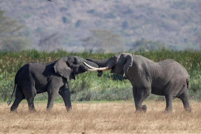 Africa - 101816 - 6283-Edit.jpg