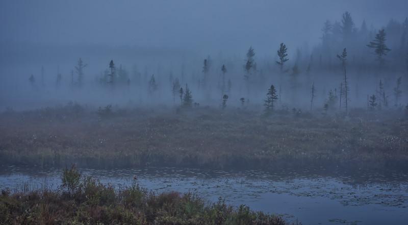 Sept 24-2018-Spruce bog_09-2.jpg