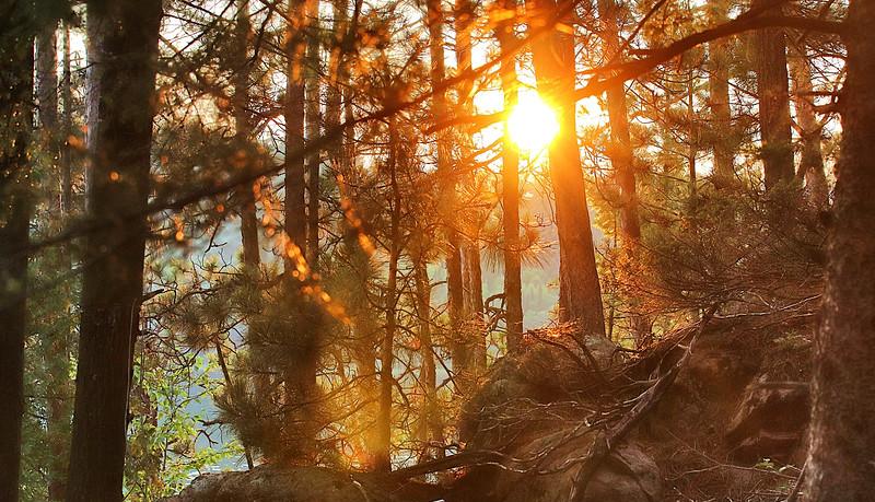 SunThruTrees_Snapseed.jpg