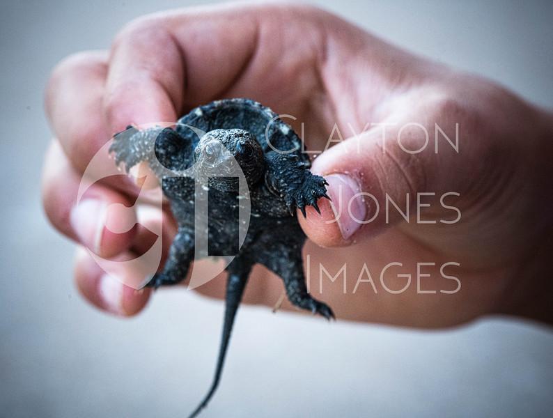 turtles_5.31.2020_-9.jpg