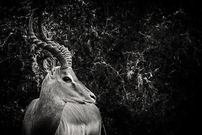South Africa - Shamwari Game Reserve