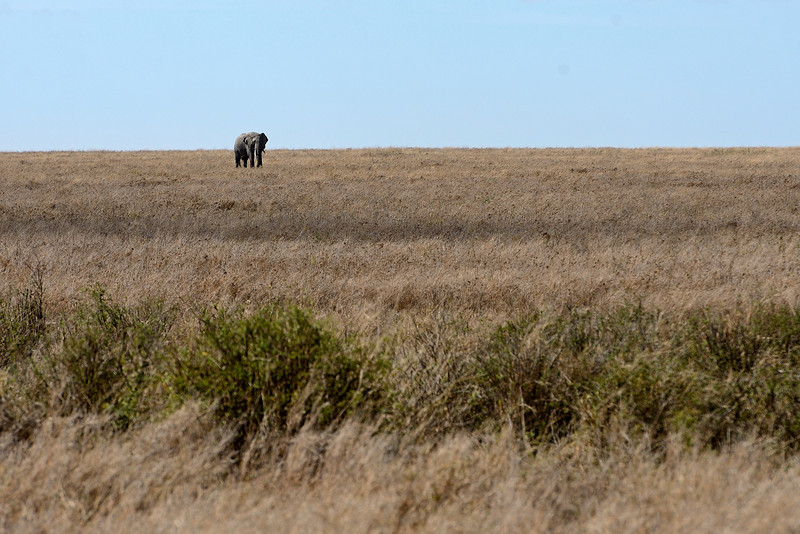 Elephant-scape.jpg